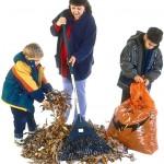 raking leaves 1
